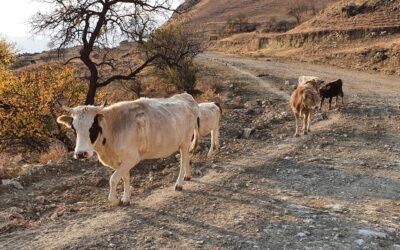 """Dagestan Camp 2020 день 2. """"Мы же не коровы"""""""