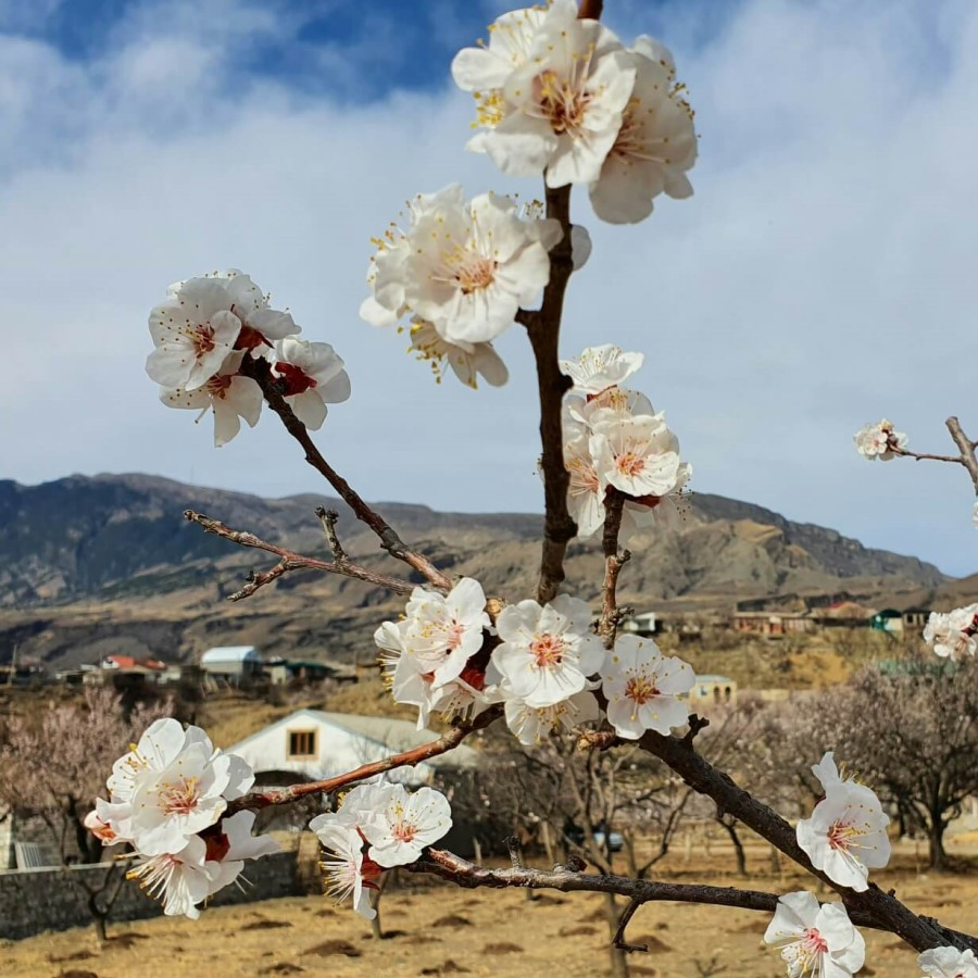 весна в Дагестане